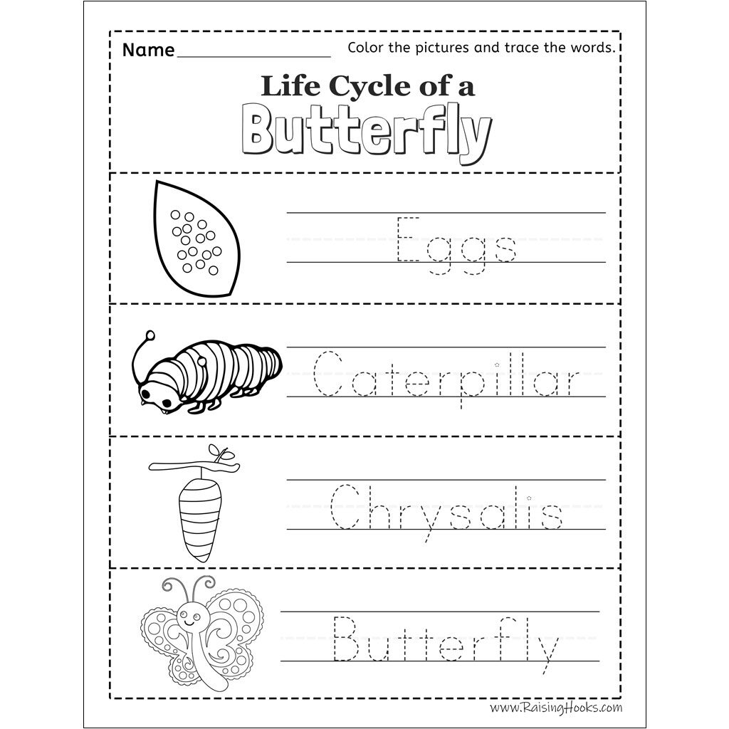 Life Cycle Of A Butterfly Tracing Worksheet   Raising Hooks Regarding Name Tracing Colored