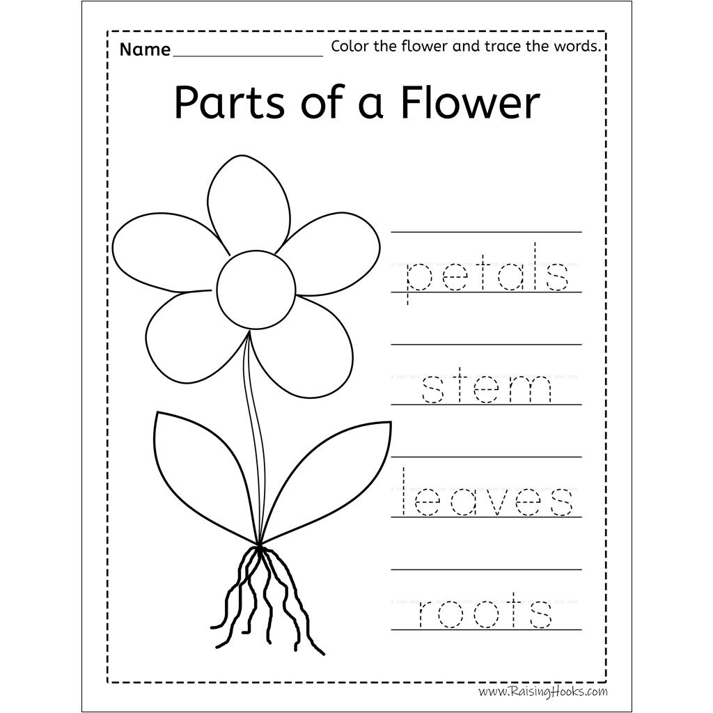 Parts Of A Flower Word Trace   Raising Hooks Intended For Name Tracing Colored