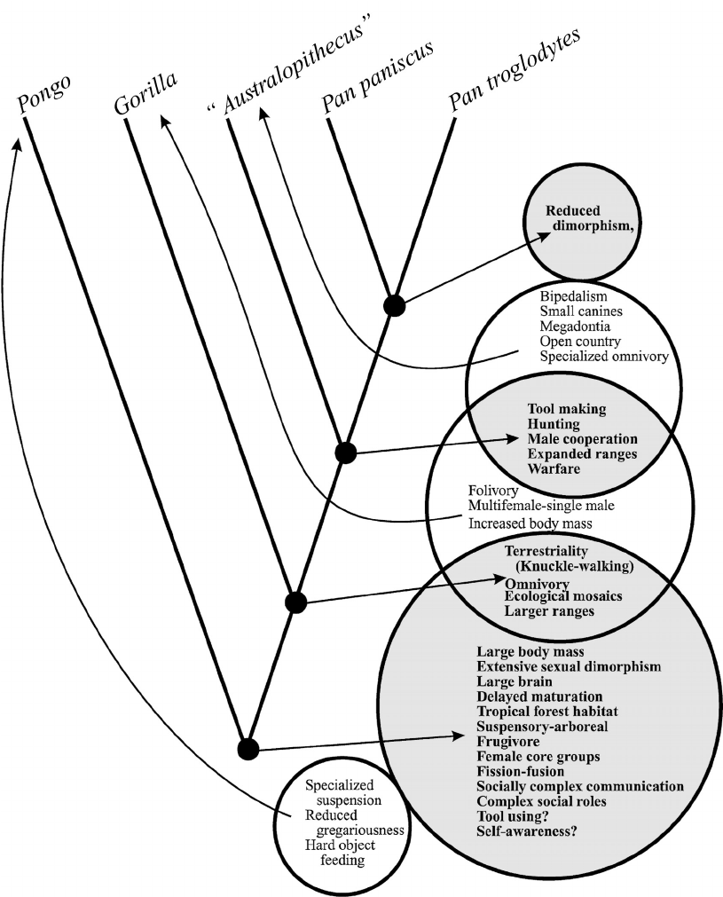 1. Cladogram And Venn Diagram Showing Evolutionary Relations for Name Some Tools For Tracing Evolutionary Relationships