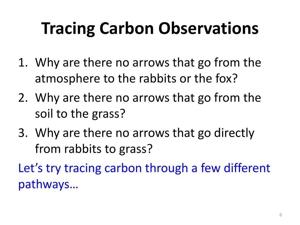 Ecosystems Unit Activity 3.3 Tracing Carbon Through