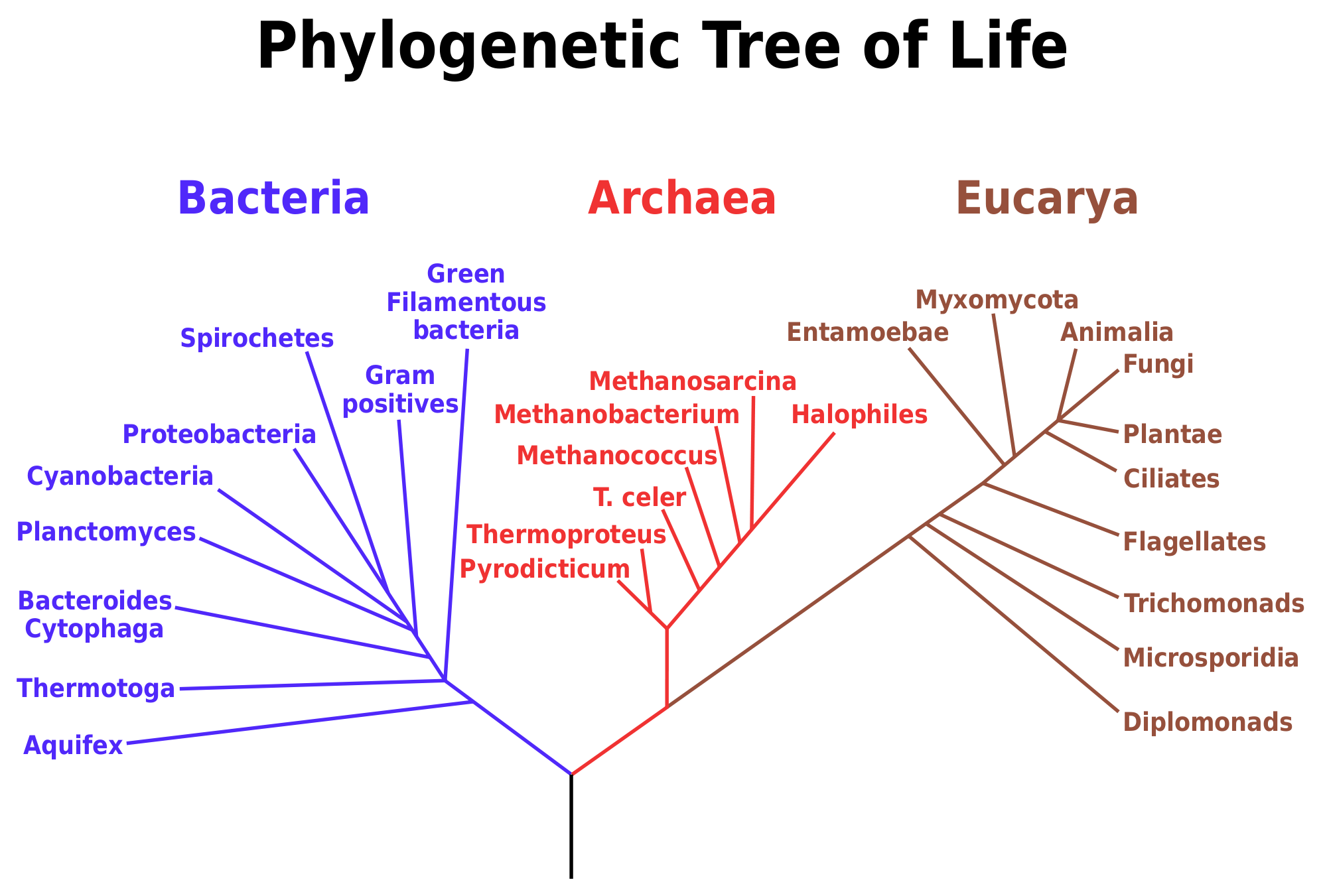 Fact Sheet: Rrna In Evolutionary Studies And Environmental with regard to Name Some Tools For Tracing Evolutionary Relationships