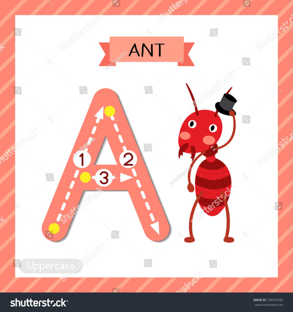 Letter Uppercase Cute Children Colorful Zoo Stock Vector Regarding Alphabet Tracing Flashcards
