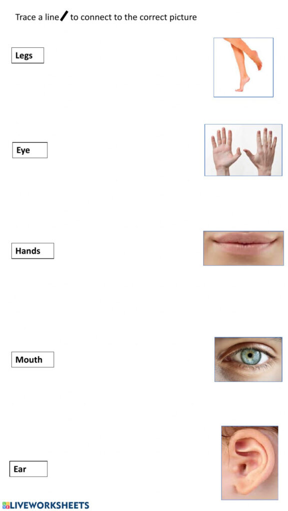 Trace And Match Body Parts   Interactive Worksheet