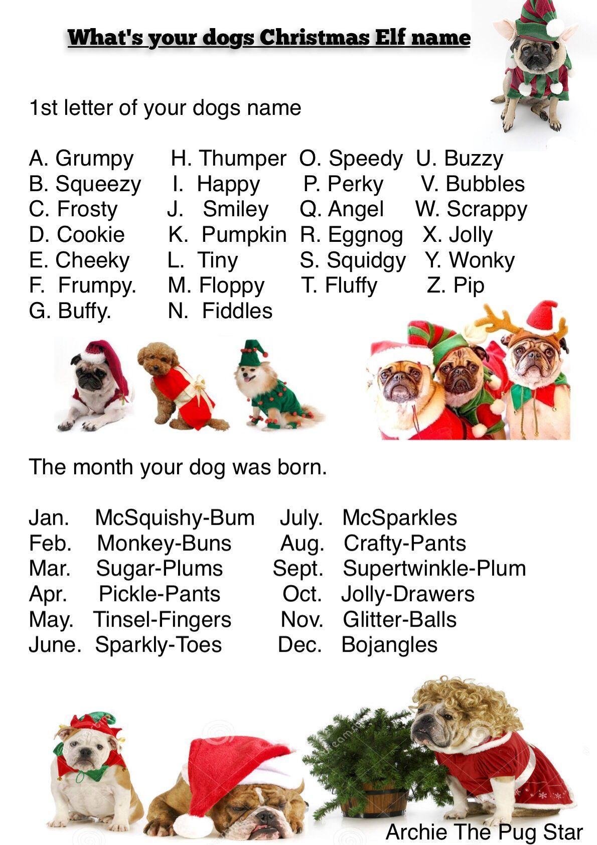 A Bit Of Christmas Fun | Christmas Dog, Christmas Elf