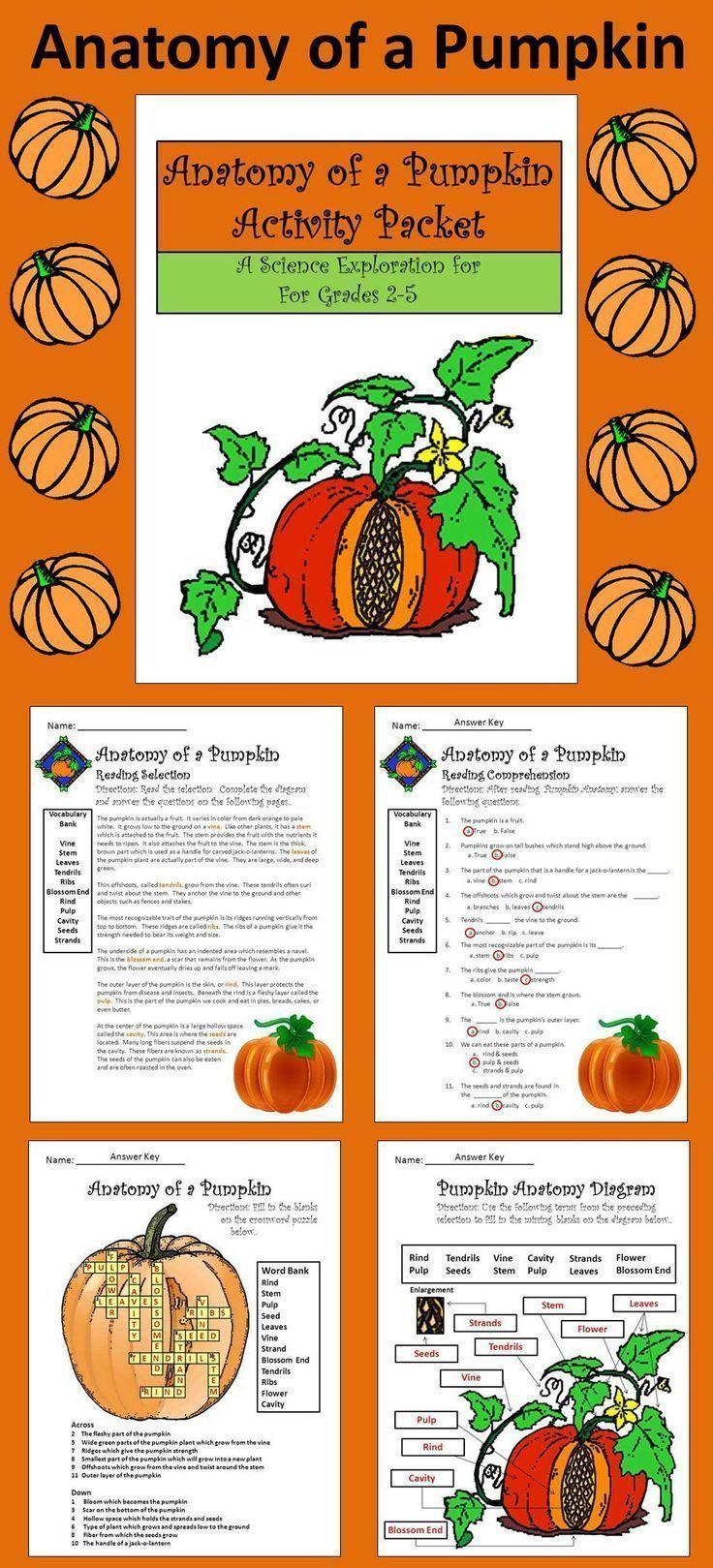Halloween Activities: Anatomy Of A Pumpkin Activity Packet
