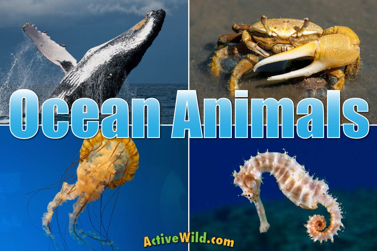 Ocean Animals For Kids & Adults: List Of Animals That Live