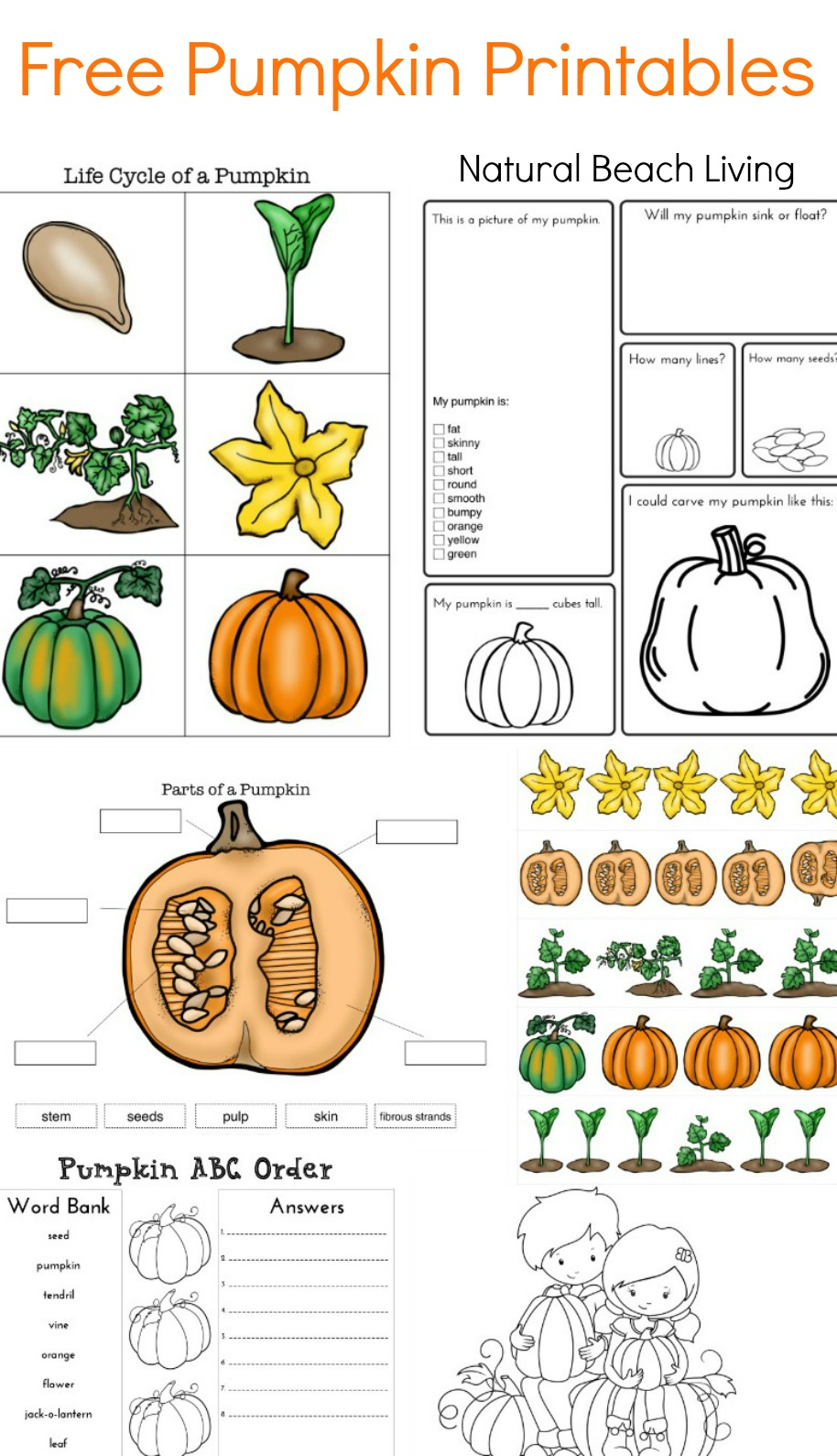 Pumpkin Activities For Kids Theme Lesson Plan Stem Science