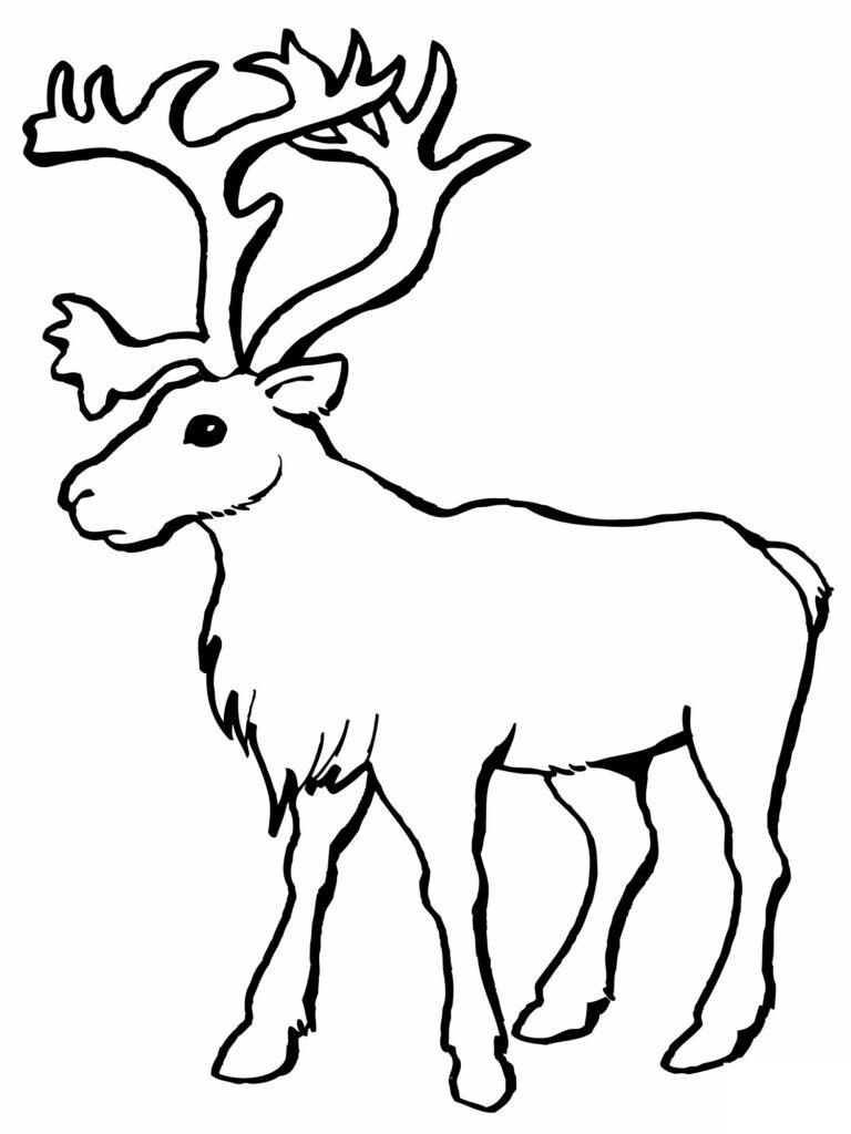 Reindeer Coloring Sheet Printable Pages Coloringme Com Santa
