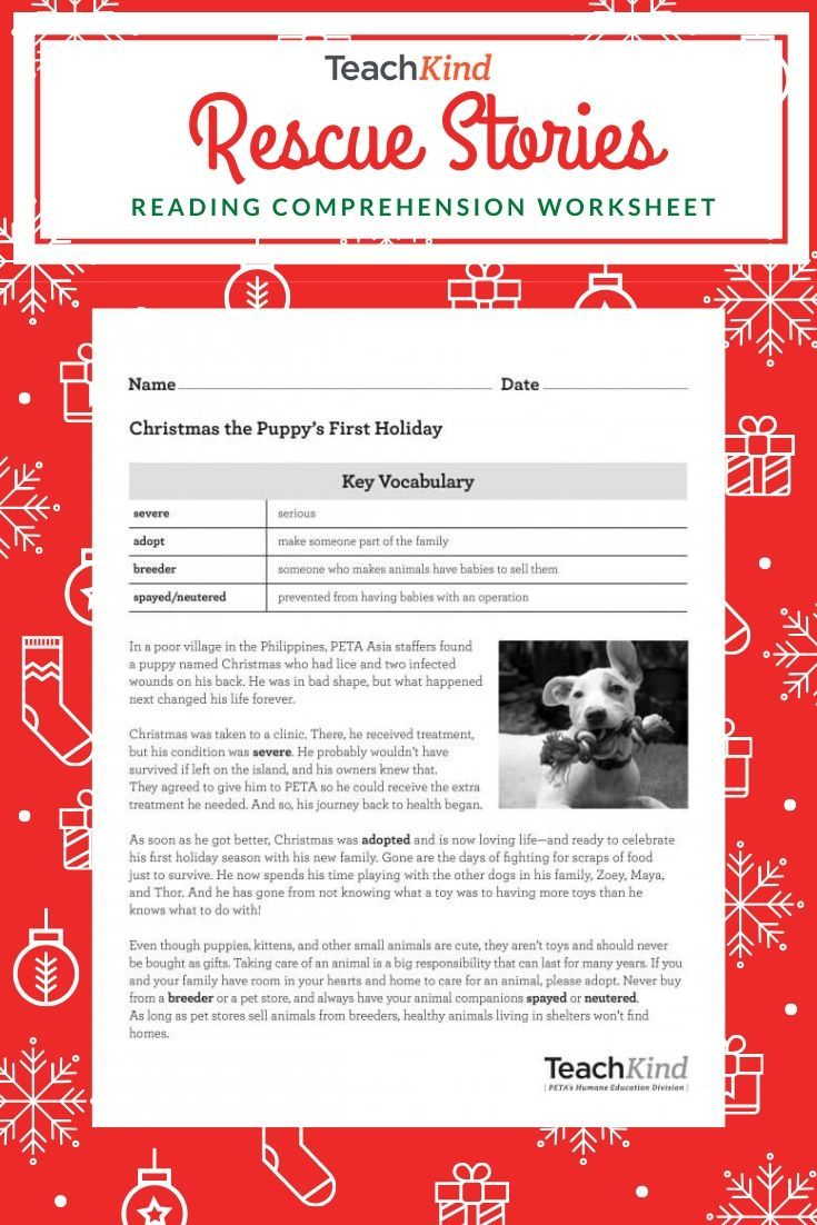 Teachkind Rescue Stories: Christmas The Puppy's First